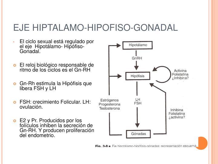 EJE HIPTALAMO-HIPOFISO-GONADAL