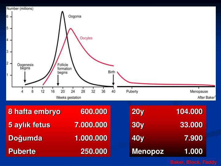 8 hafta embryo   600.000