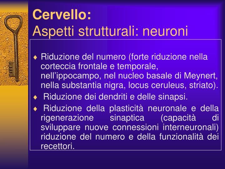 Cervello: