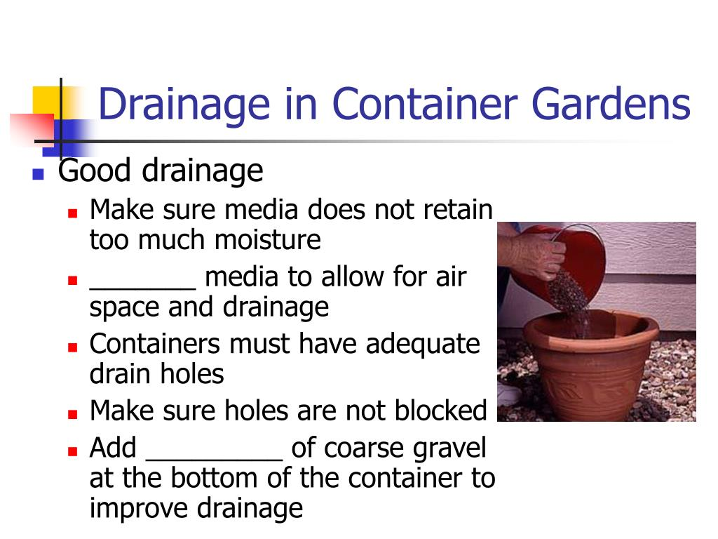 Drainage in Container Gardens