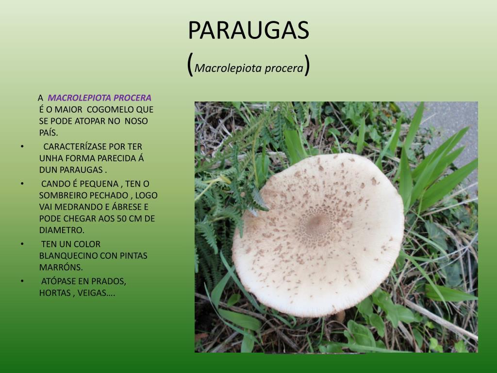 PARAUGAS