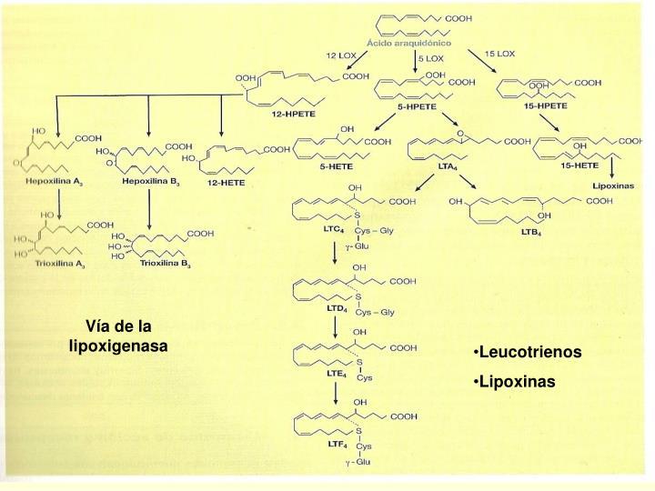 Vía de la lipoxigenasa
