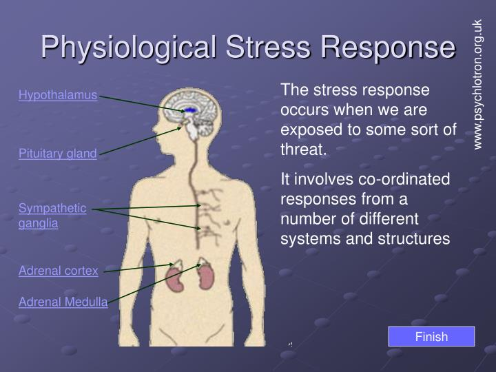 Physiological stress response1