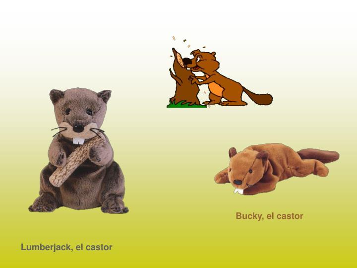 Bucky, el castor