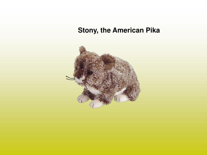 Stony, the American Pika