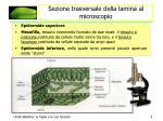 sezione trasversale della lamina al microscopio