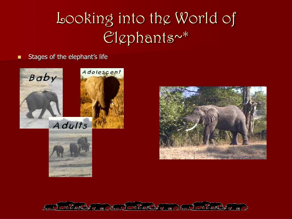 Looking into the World of Elephants~*