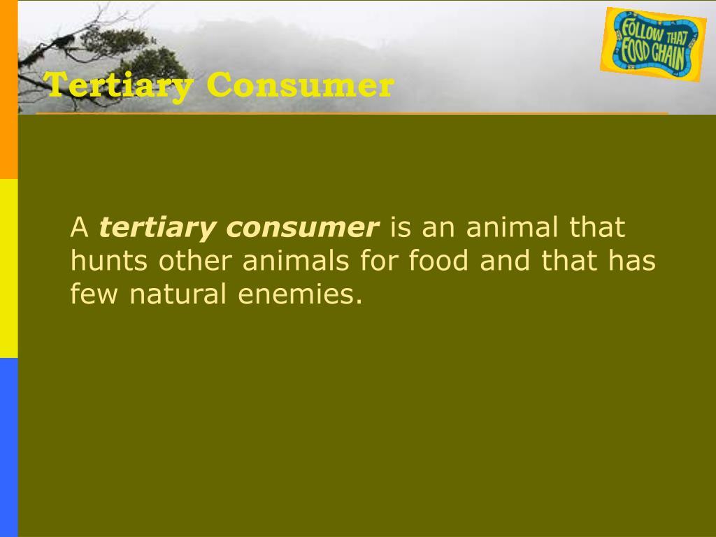 Tertiary Consumer