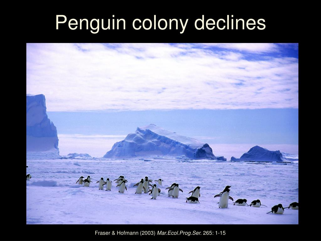 Penguin colony declines