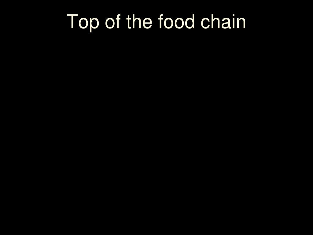 Top of the food chain
