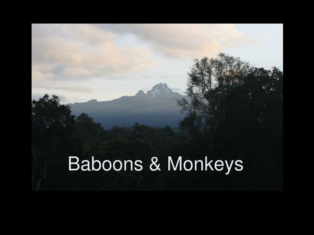 Baboons & Monkeys