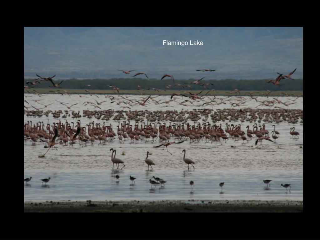 Flamingo Lake