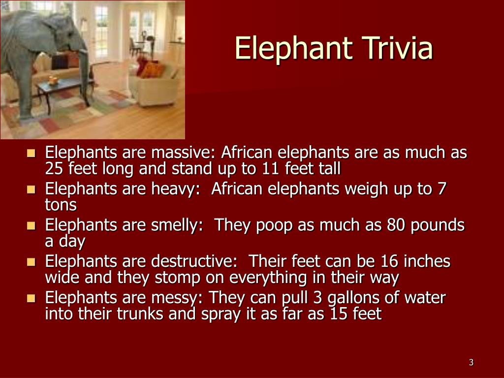 Elephant Trivia