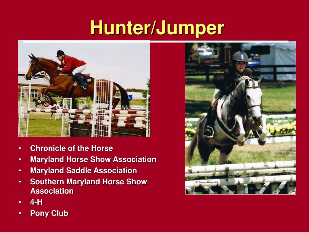 Hunter/Jumper