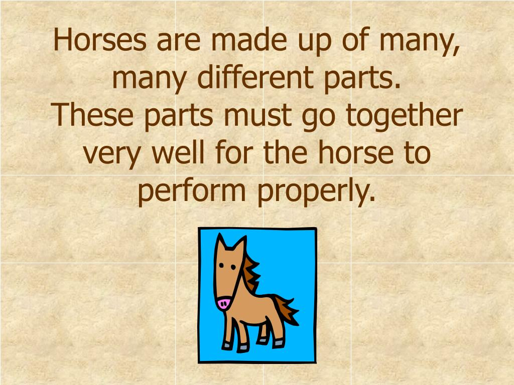 Horses are made up of many, many different parts.