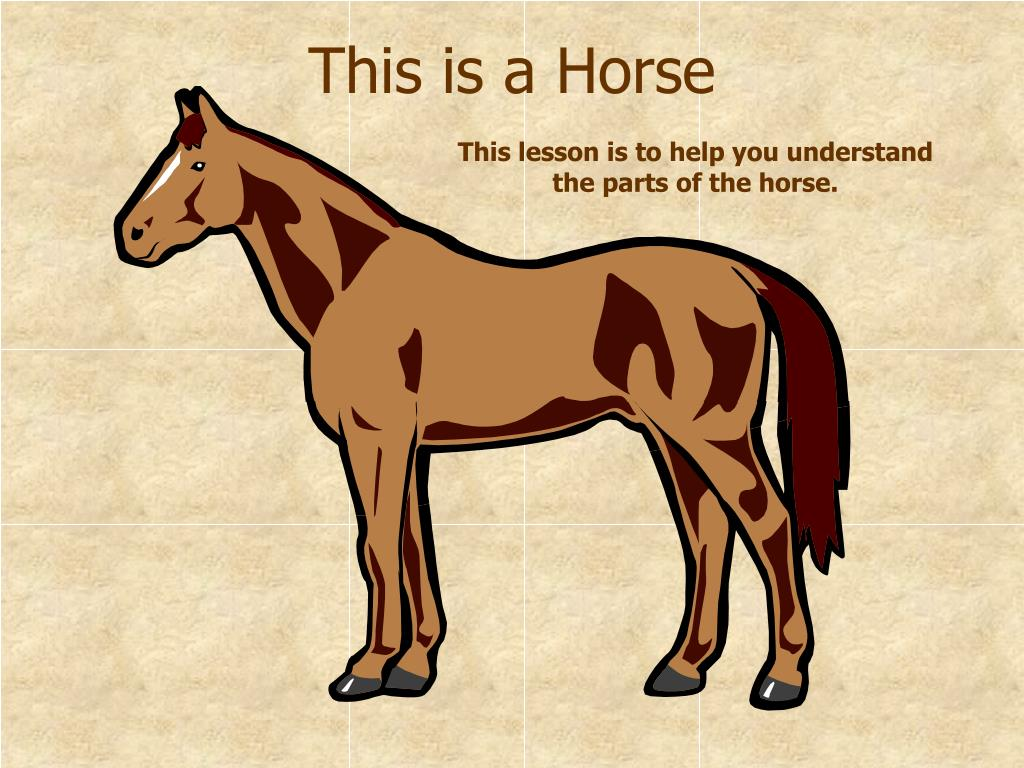 This is a Horse