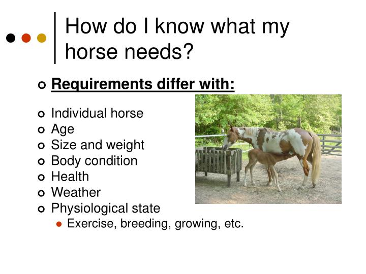 How do i know what my horse needs