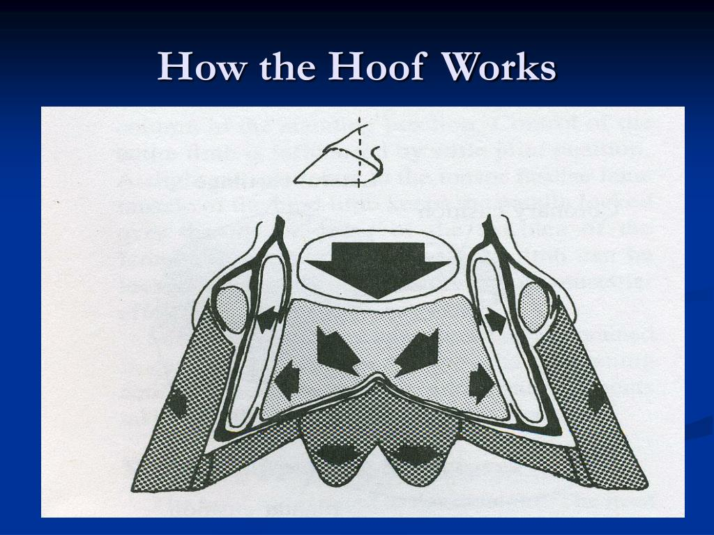 How the Hoof Works