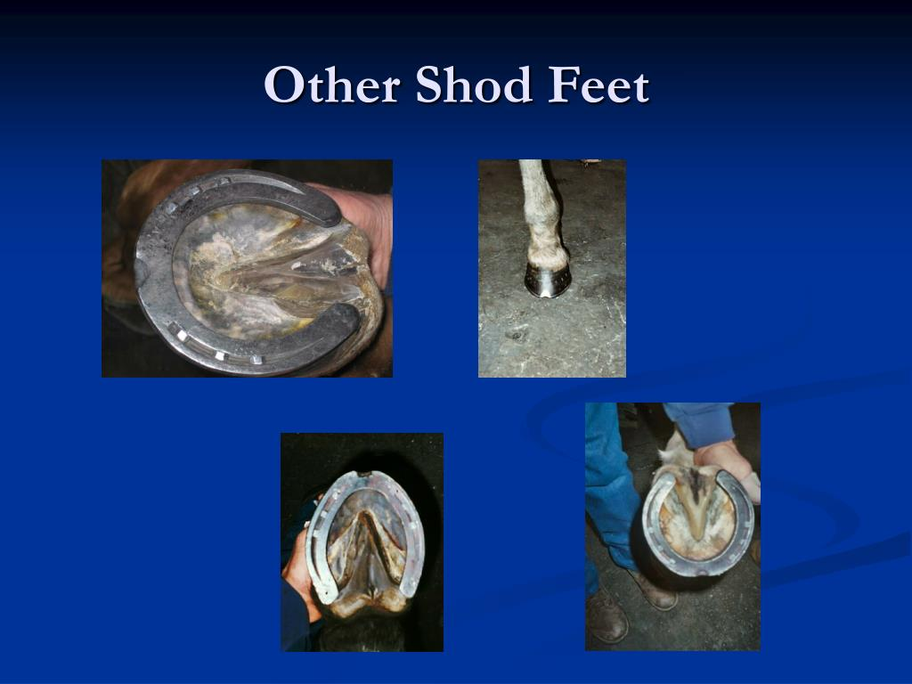 Other Shod Feet