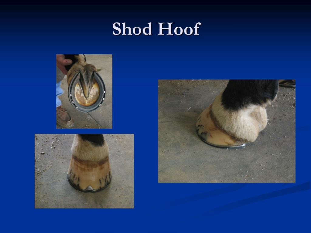 Shod Hoof