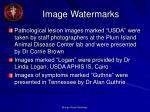 image watermarks