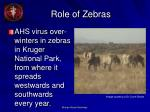 role of zebras