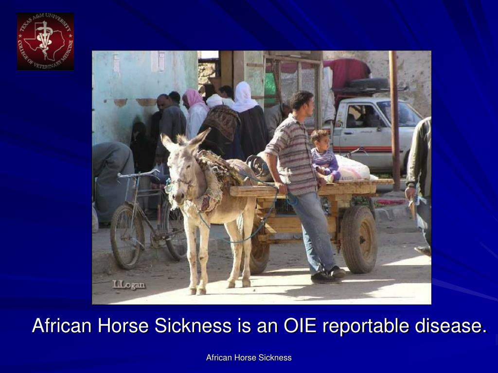 African Horse Sickness is an OIE reportable disease.