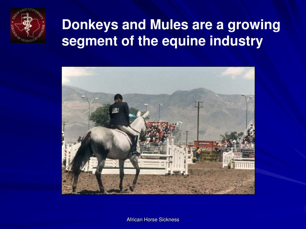 Donkeys and Mules are a growing