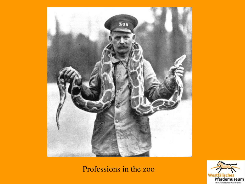 Professions in the zoo