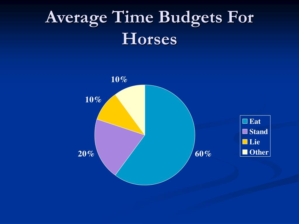 Average Time Budgets For Horses