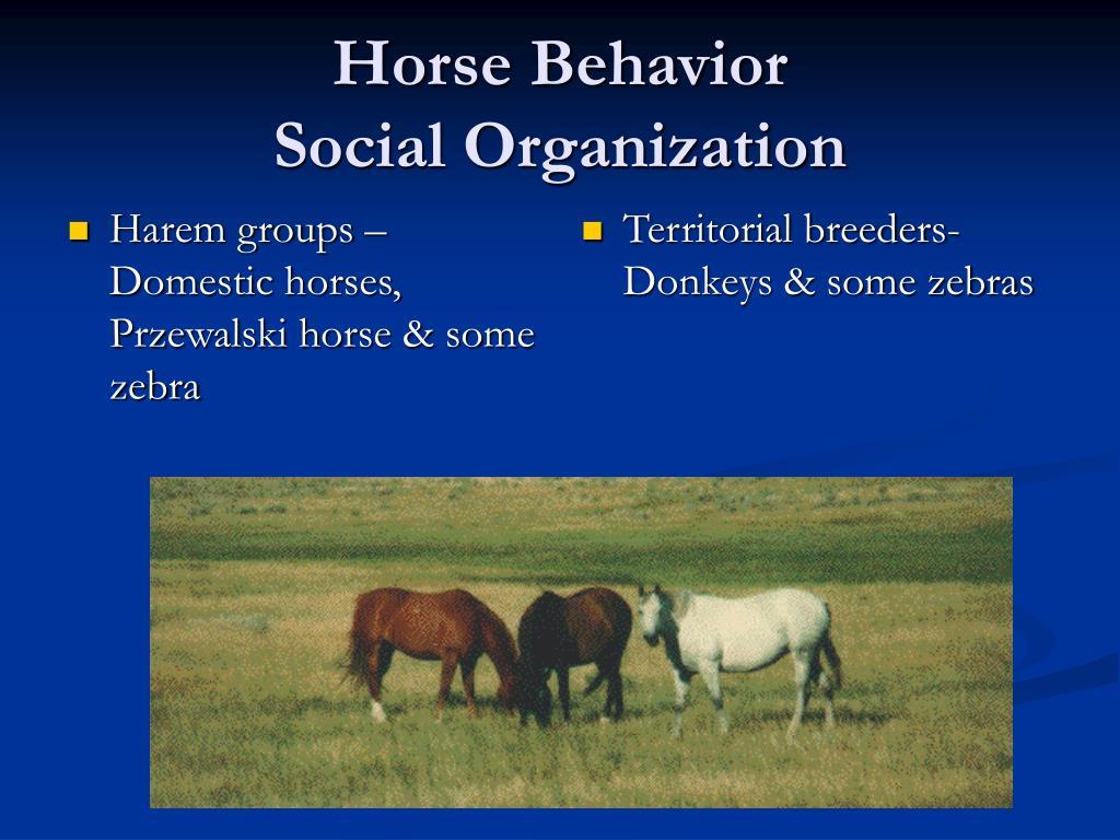Harem groups – Domestic horses, Przewalski horse & some zebra