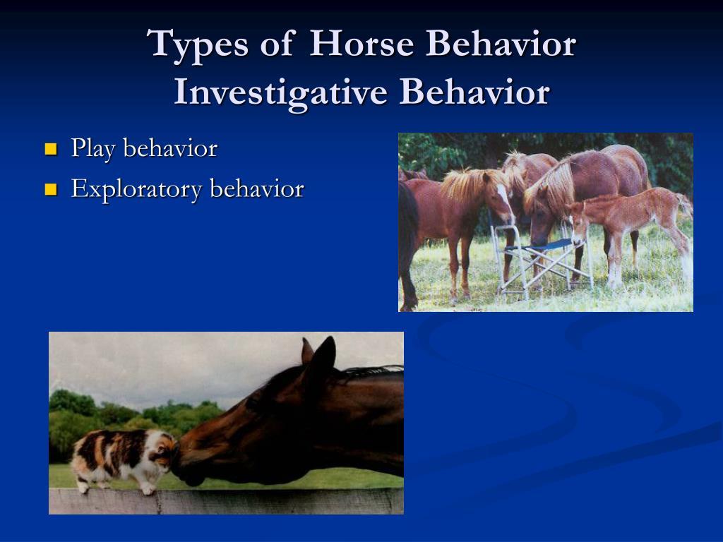 Types of Horse Behavior