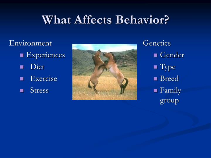 What affects behavior