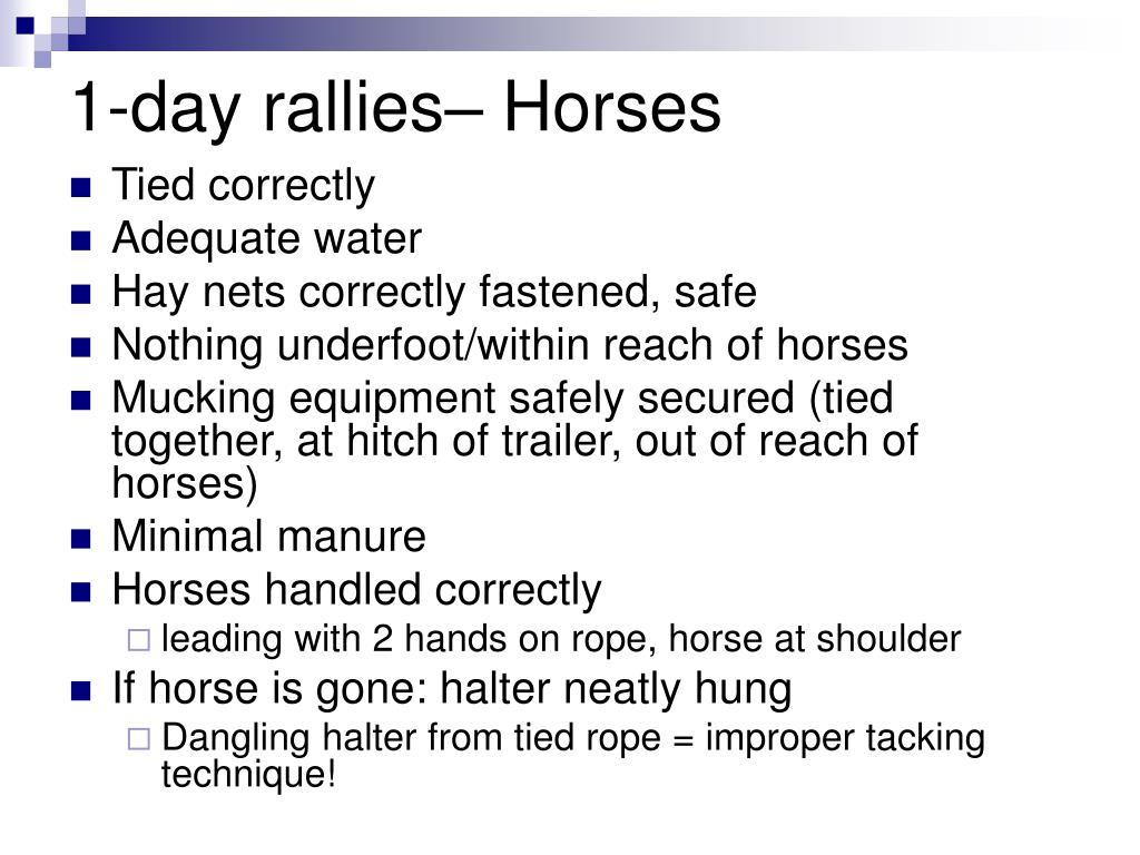 1-day rallies– Horses