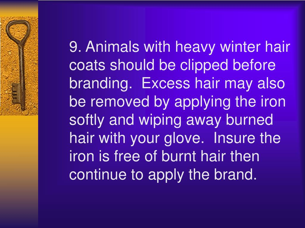 9. Animals with heavy winter hair coats should be clipped before branding. Excess hair may also be removed by applying the iron softly and wiping away burned hair with your glove. Insure the iron is free of burnt hair then continue to apply the brand.
