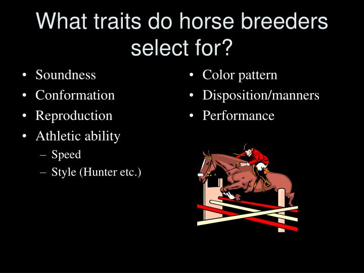 What traits do horse breeders select for