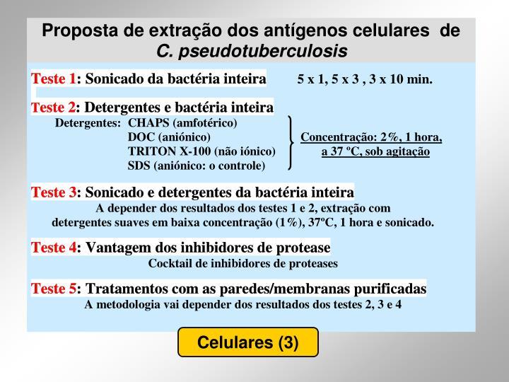Celulares (3)