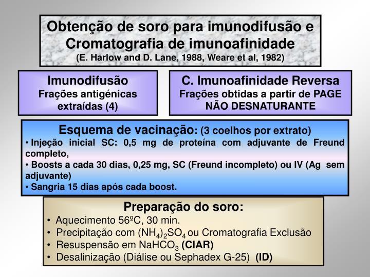 Obtenção de soro para imunodifusão e Cromatografia de imunoafinidade