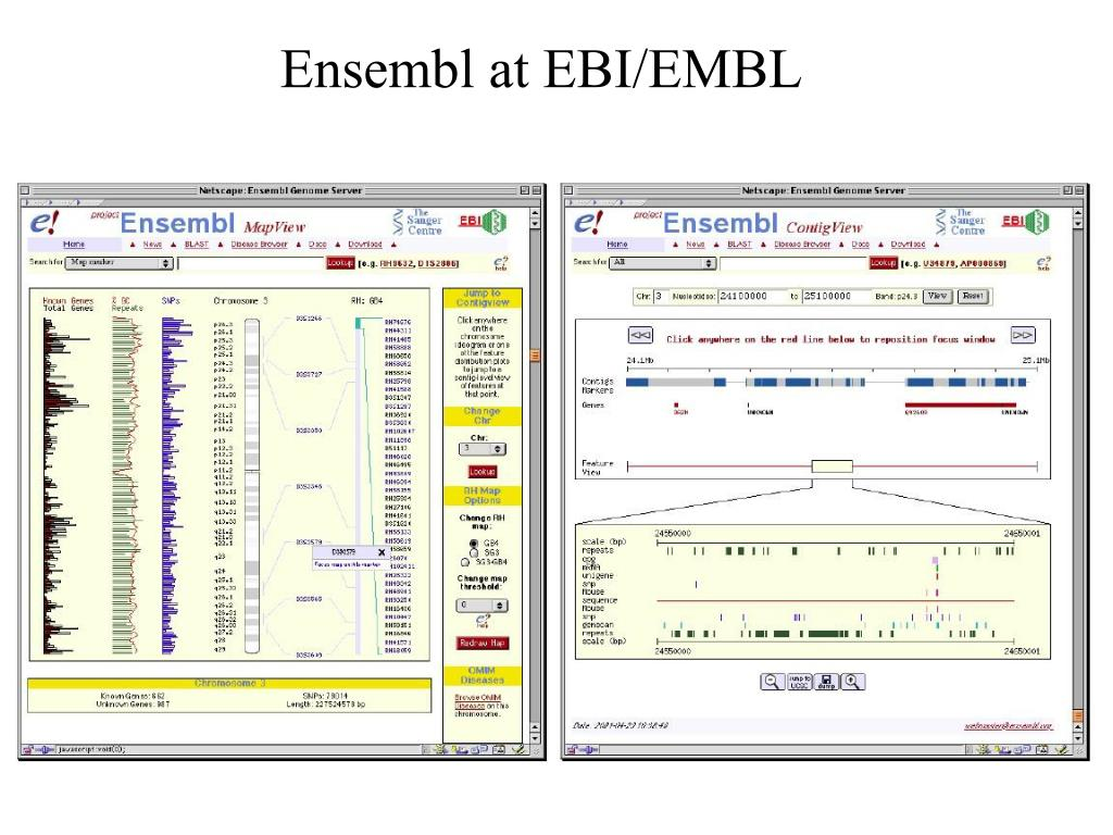 Ensembl at EBI/EMBL