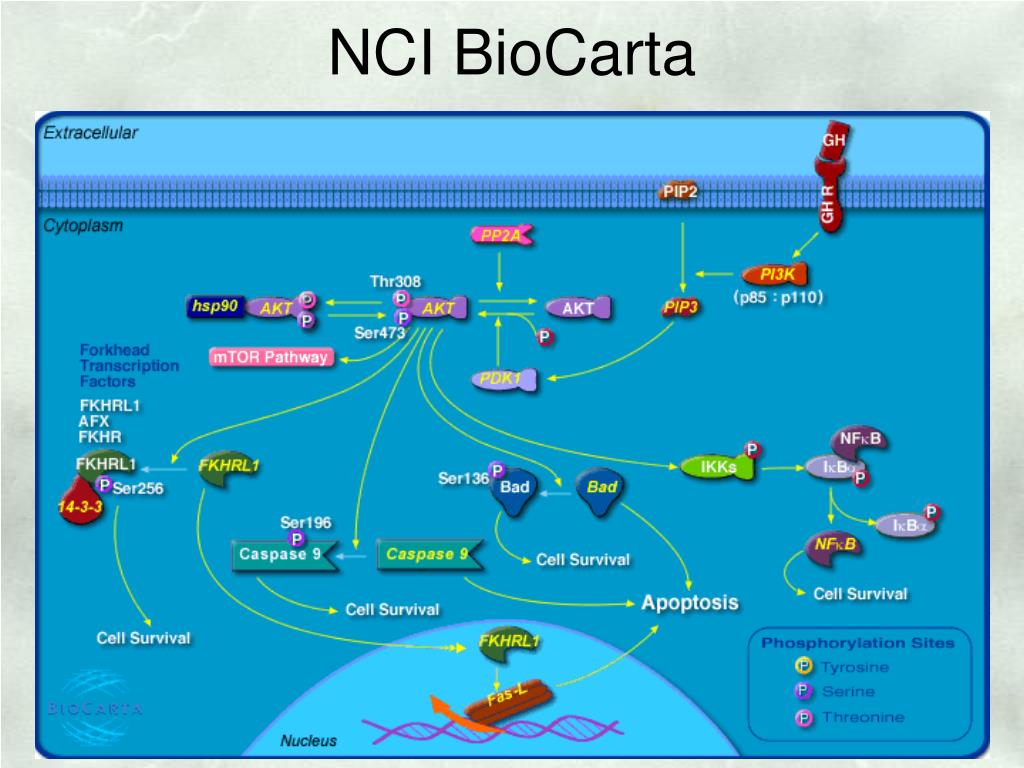 NCI BioCarta