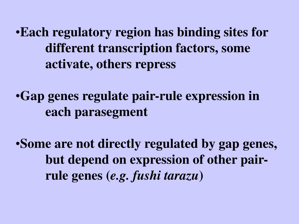 Each regulatory region has binding sites for 	different transcription factors, some 	activate, others repress