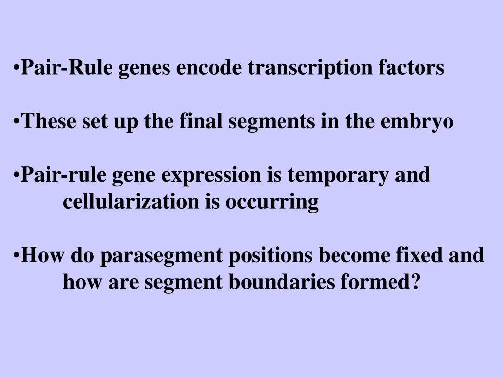 Pair-Rule genes encode transcription factors