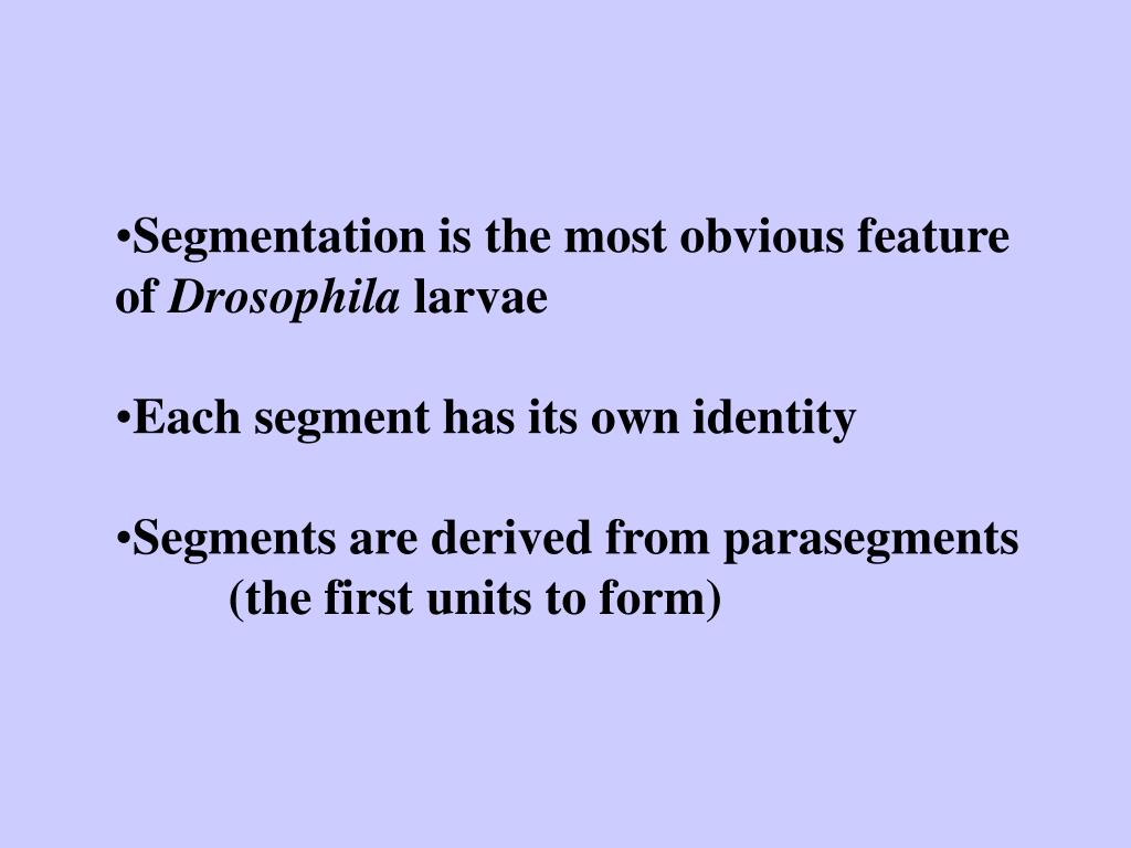 Segmentation is the most obvious feature of