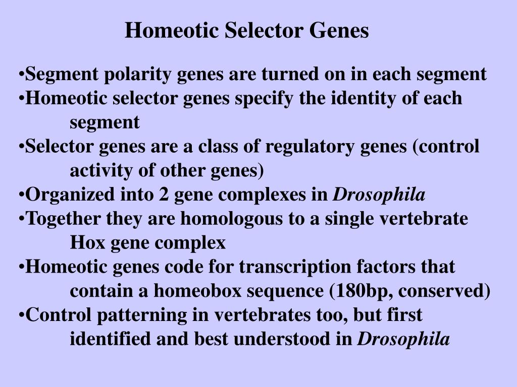 Homeotic Selector Genes