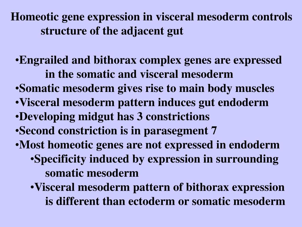 Homeotic gene expression in visceral mesoderm controls 	structure of the adjacent gut