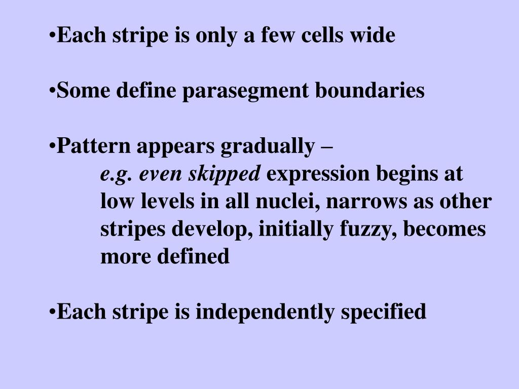 Each stripe is only a few cells wide