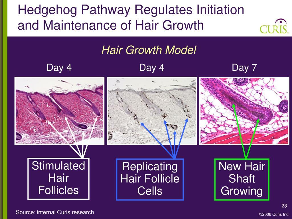 Hair Growth Model