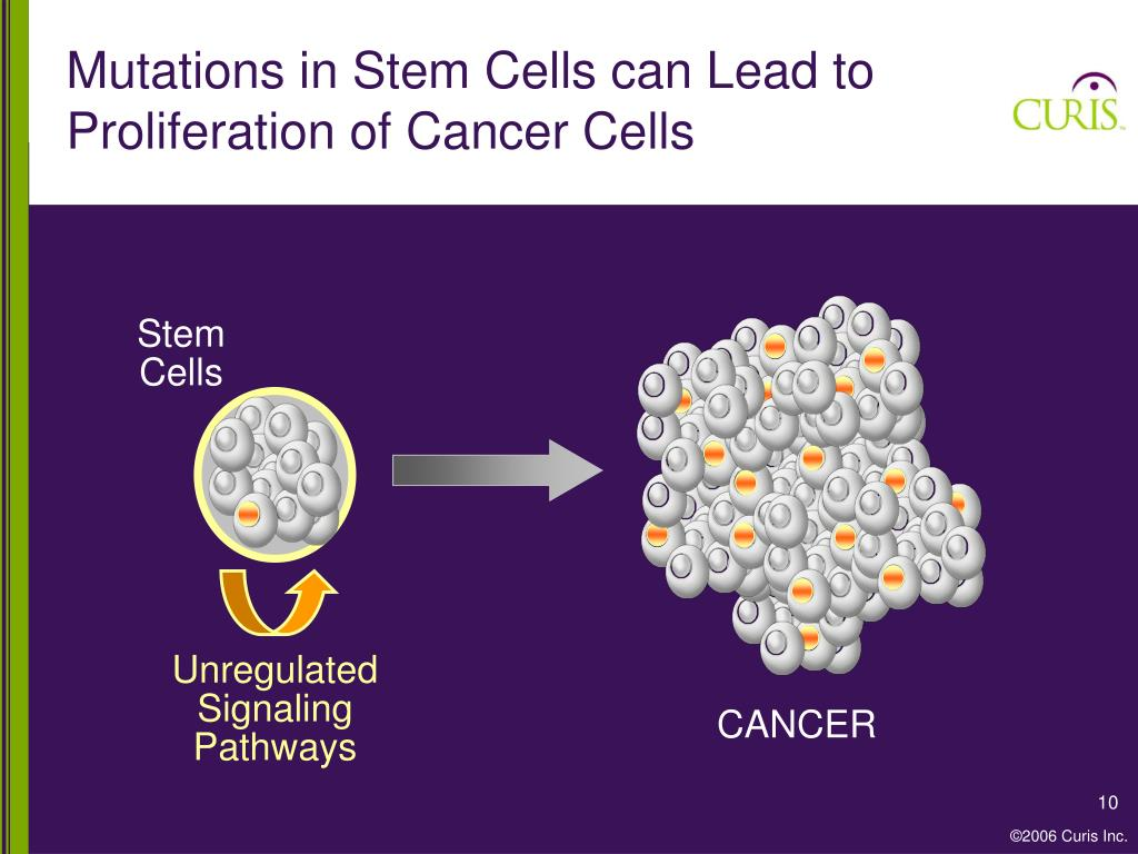 Mutations in Stem Cells can Lead to Proliferation of Cancer Cells