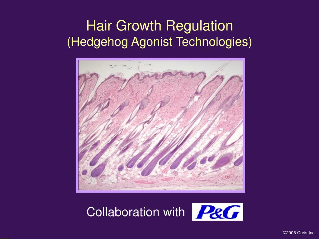 Hair Growth Regulation