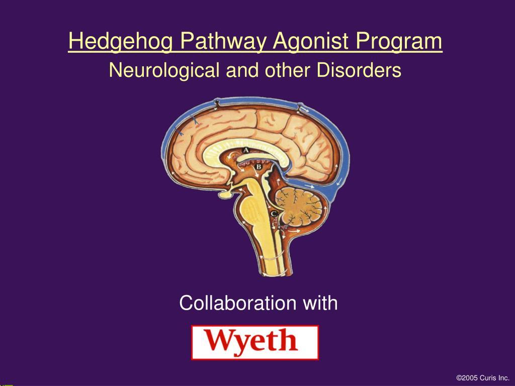 Hedgehog Pathway Agonist Program